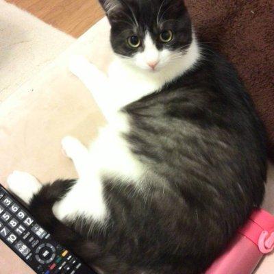 テレビでも見る? 仔猫時代