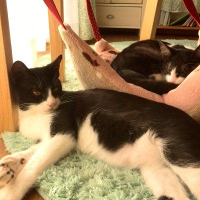 僕もニャンモックで寝たいな 猫の手作りハンモック